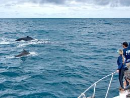 #71: Baleias e Golfinhos - Últimos Refúgios na TV Ambiental