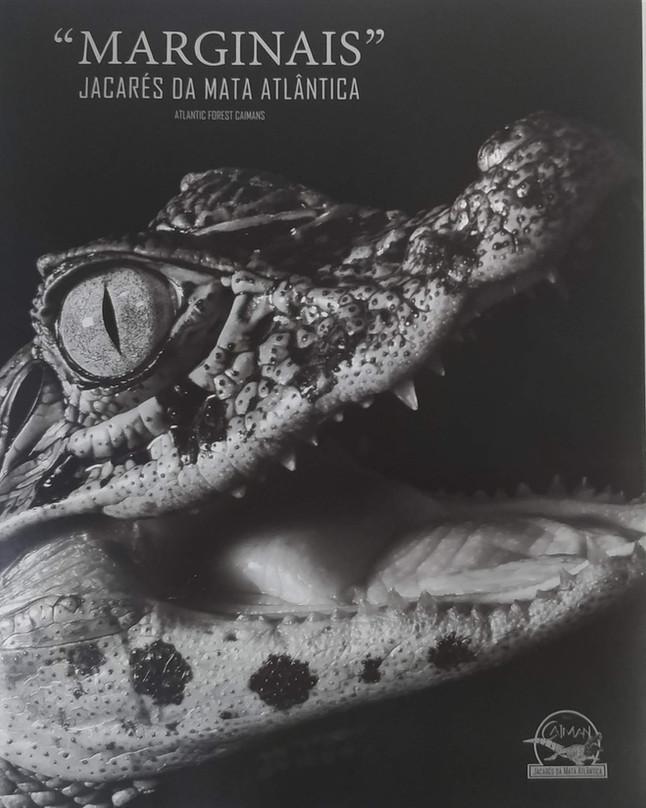 """Projeto Caiman lança novo livro - """"Marginais"""": Jacarés da Mata Atlântica"""