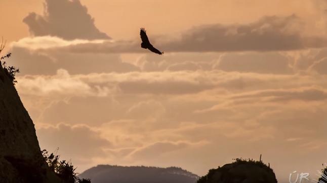 #6: Águia-chilena e resgate de jacarés - Últimos Refúgios na TV Ambiental