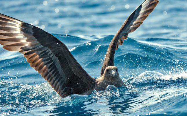 #46: Ação coletiva em prol da vida marinha - Últimos Refúgios na TV Ambiental