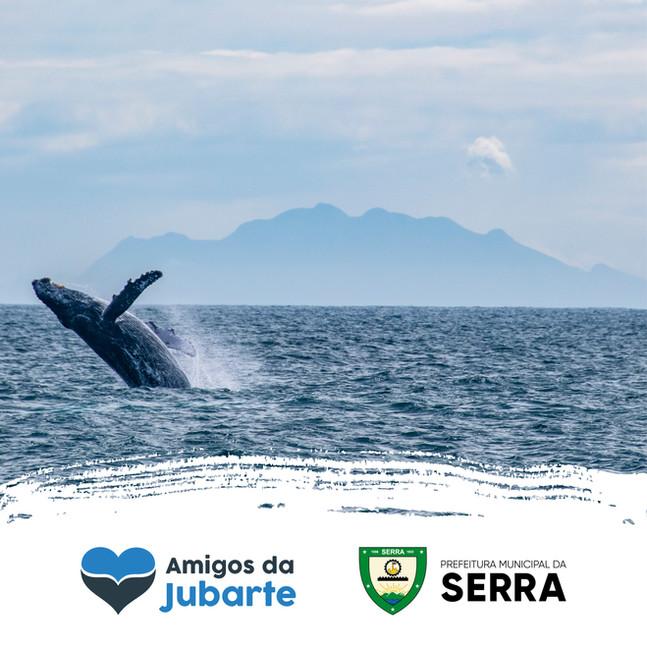 """Projeto """"Tour Amigos da Jubarte"""" fomenta turismo de observação de baleias na Serra"""