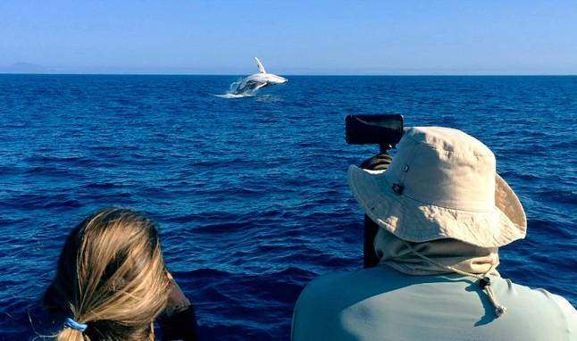 Fotógrafo de natureza relata experiência fotografando baleias em alto mar