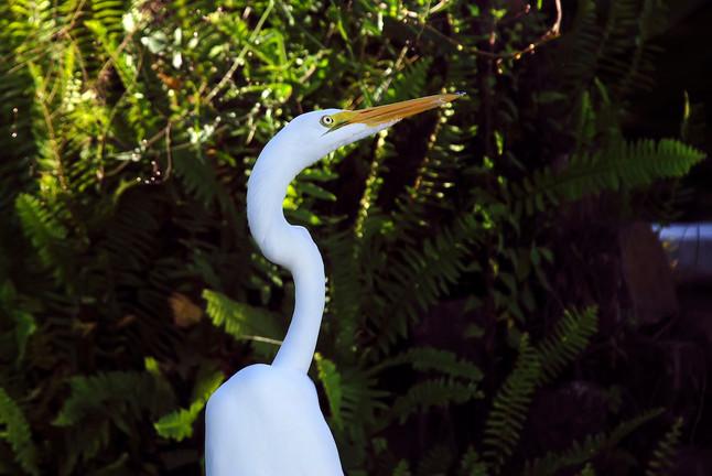 #48: Vida na lagoa e filhotes de jacaré - Últimos Refúgios na TV Ambiental