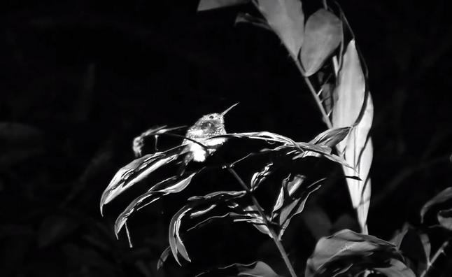 #19: Câmera Térmica - Últimos Refúgios na TV Ambiental