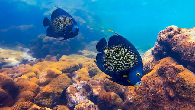 #29: Snorkel nas Três Ilhas, Guarapari/ES - Últimos Refúgios na TV Ambiental