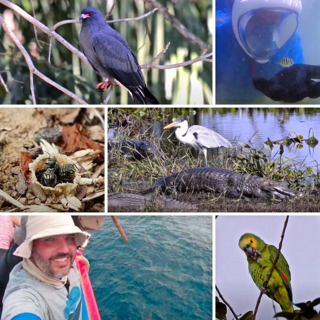 Natureza através das câmeras: fotógrafo revela biodiversidade brasileira no Youtube