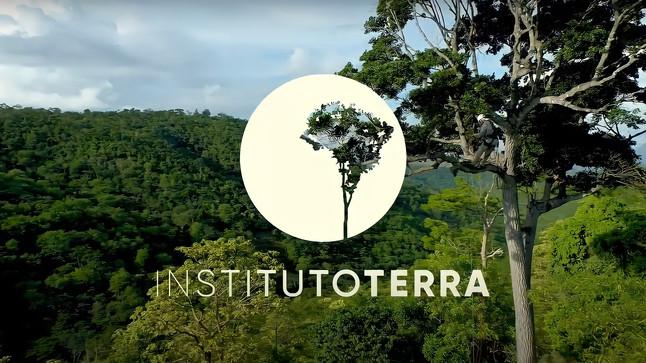 #Refloresta: conheça a campanha de restauração ambiental do Instituto Terra