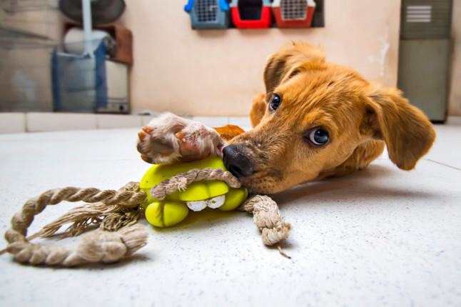 Ensaio fotográfico no 'Patinhas Carentes' ajuda animais na busca por um novo lar