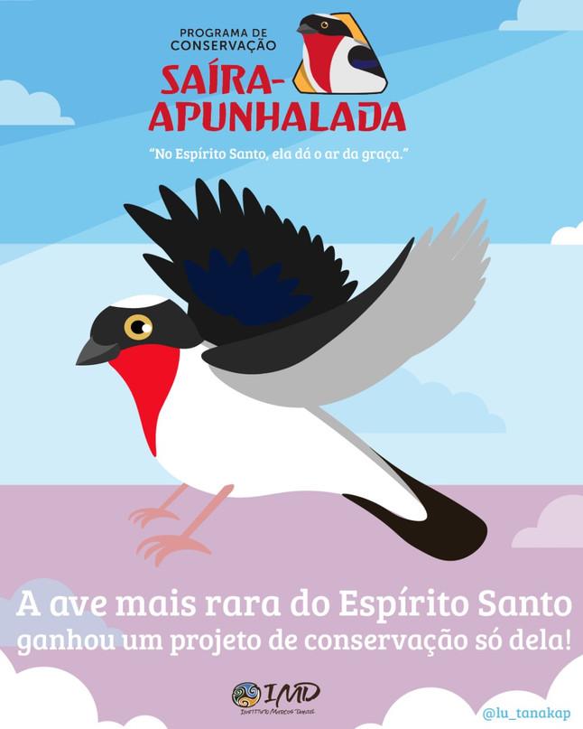 Saíra-apunhalada, ave mais rara do Espírito Santo, ganha novo projeto de conservação