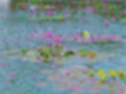 waterlilies2_small.png
