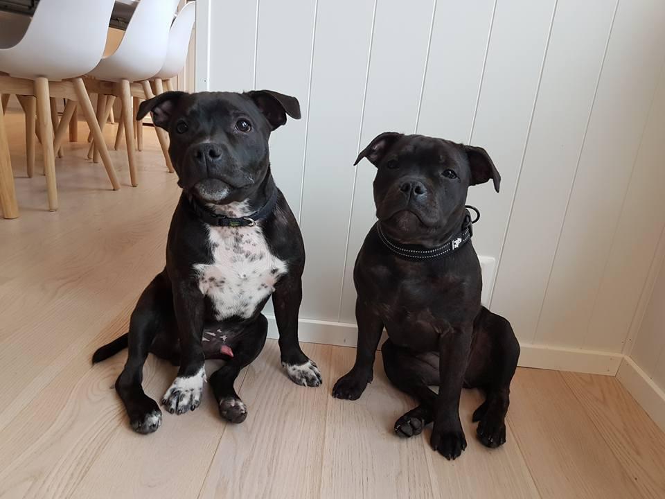 Rolf og Kayla