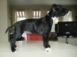 Levah 3 months