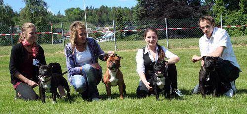 Terrier Special 2009