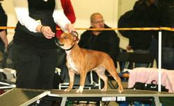 Hund2009 Lilly