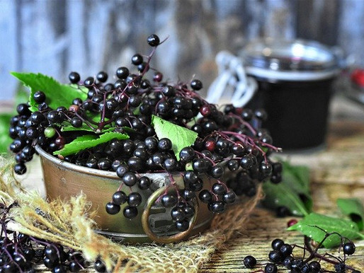 Elderberry Syrup - your Autumn Immune Bomb