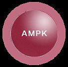 The Original Resveratrol 白藜芦醇|复活AMPK|