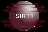 The Original Resveratrol 白藜芦醇|提高SIRT1效率|