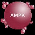 The Original Resveratrol 白藜芦醇|激活AMPK||