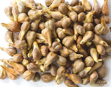 The Original Resveratrol 白藜芦醇 | 葡萄籽 | 玉米黄质 | 叶黄素 | 抗氧化 |