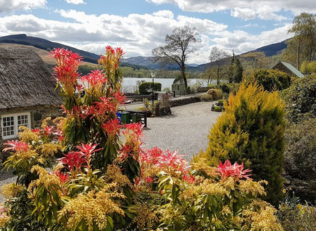 Briar Cottage Lochearnhead - on a Busmans holiday - Rest, Reflect, Reset