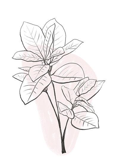 Botanical leaf print incl. kader