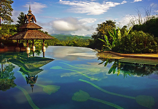beagle-piscina-tailandia.jpg