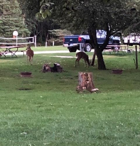 Deer by site 4