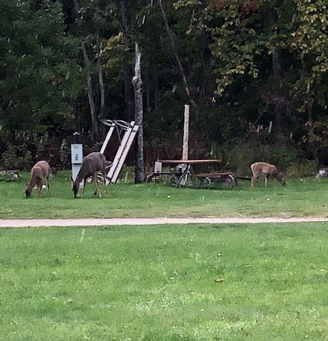Deer by site 9