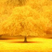 verger jaune.jpg