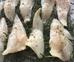 Filetti di Pesce agli Aromi