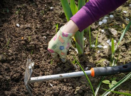 4 makkelijke tips om jouw tuin bijenvriendelijk te maken