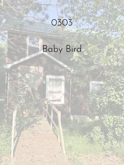 0303 | Baby Bird