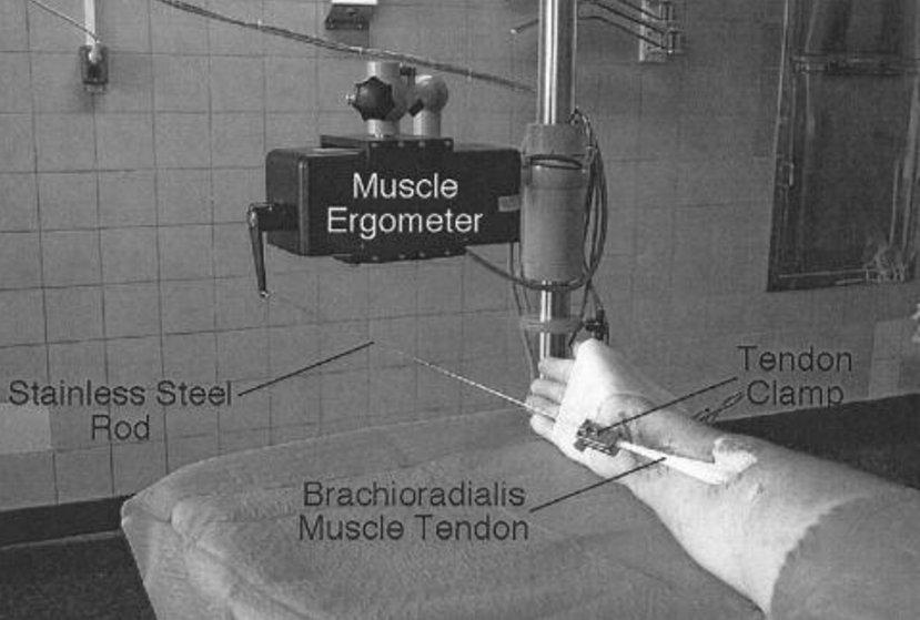Biomechanical Assistance Equipment