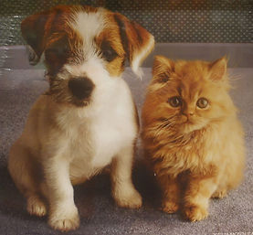 card to send cat dog.jpg