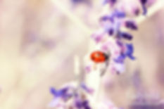 Ladybird 4x6.jpg