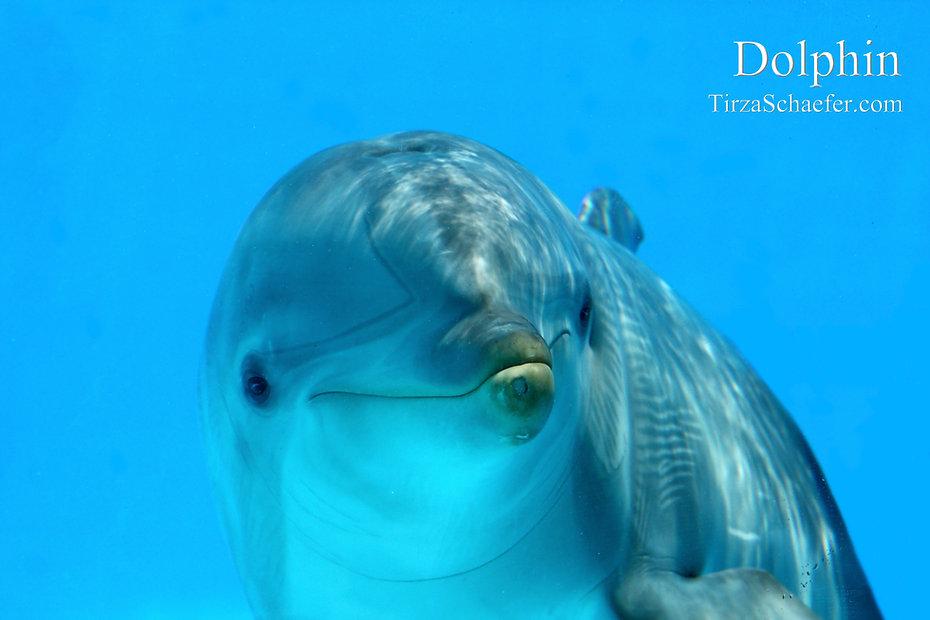 Dolphin 4x6.jpg