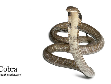 Power Animal Meditation: Cobra