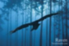 Raven 4x6.jpg