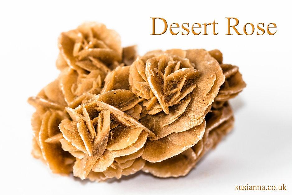 Desert Rose 4x6.jpg