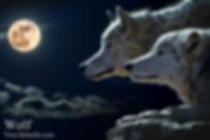 Wolf 4x6.jpg