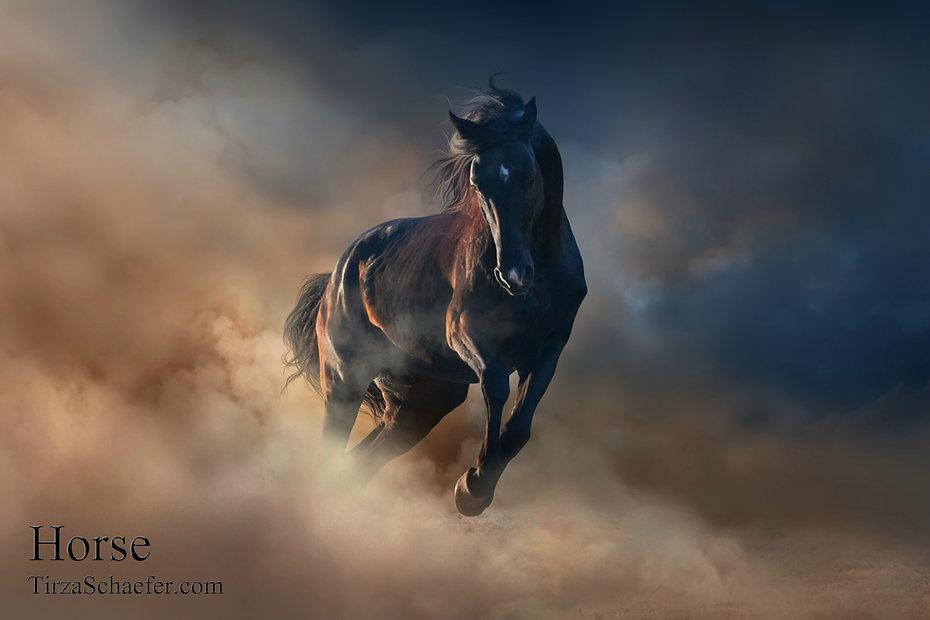 Horse 4x6.jpg