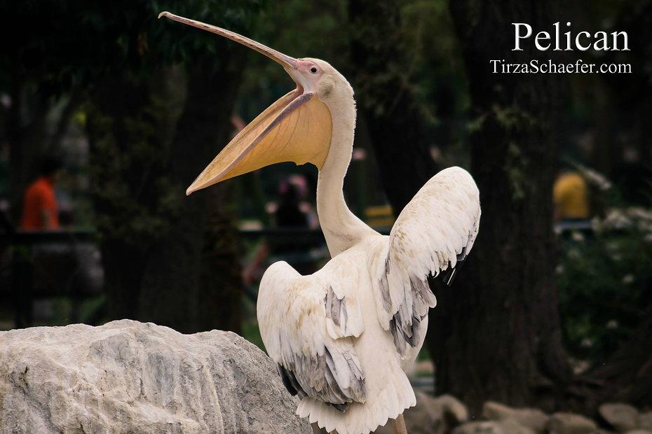Pelican 4x6.jpg