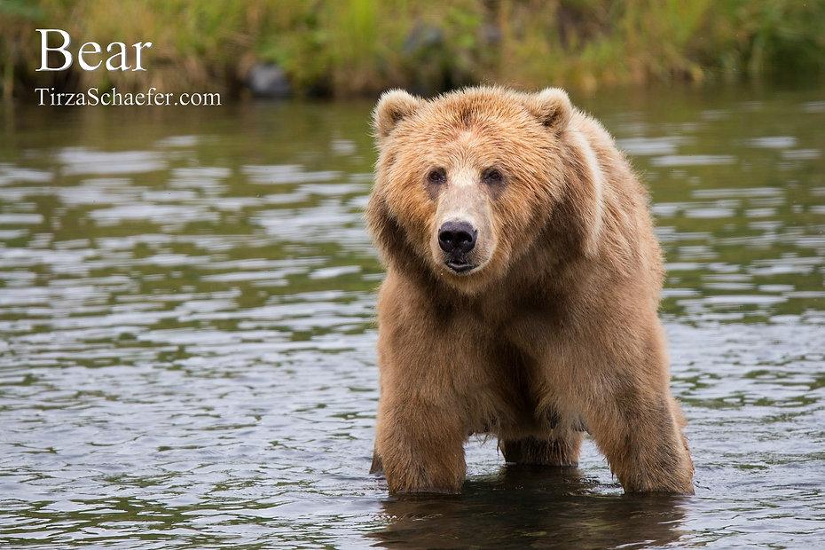 Bear 4x6.jpg