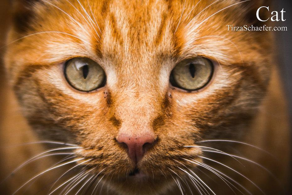 Cat 4x6.jpg