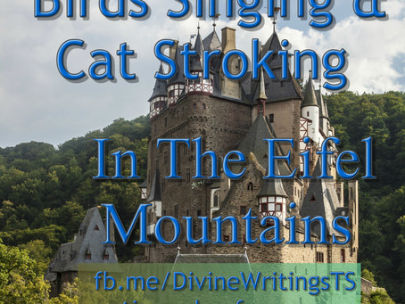 Thoughts, Inspiration, Education:  Birds Singing & Cat Stroking
