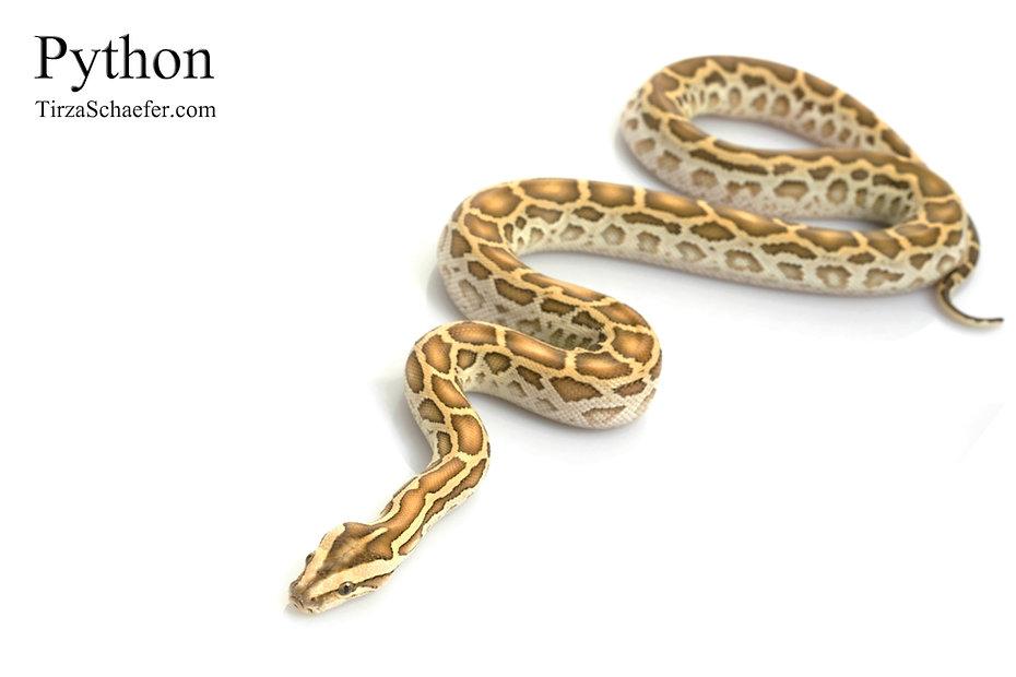 Python 4x6.jpg
