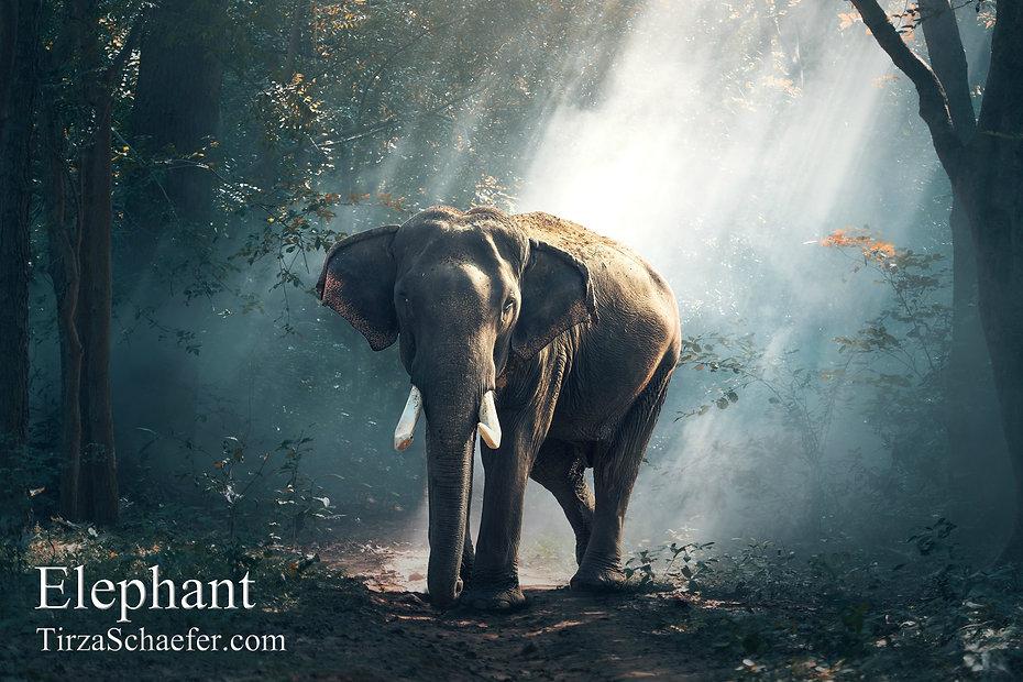 Elephant 4x6.jpg