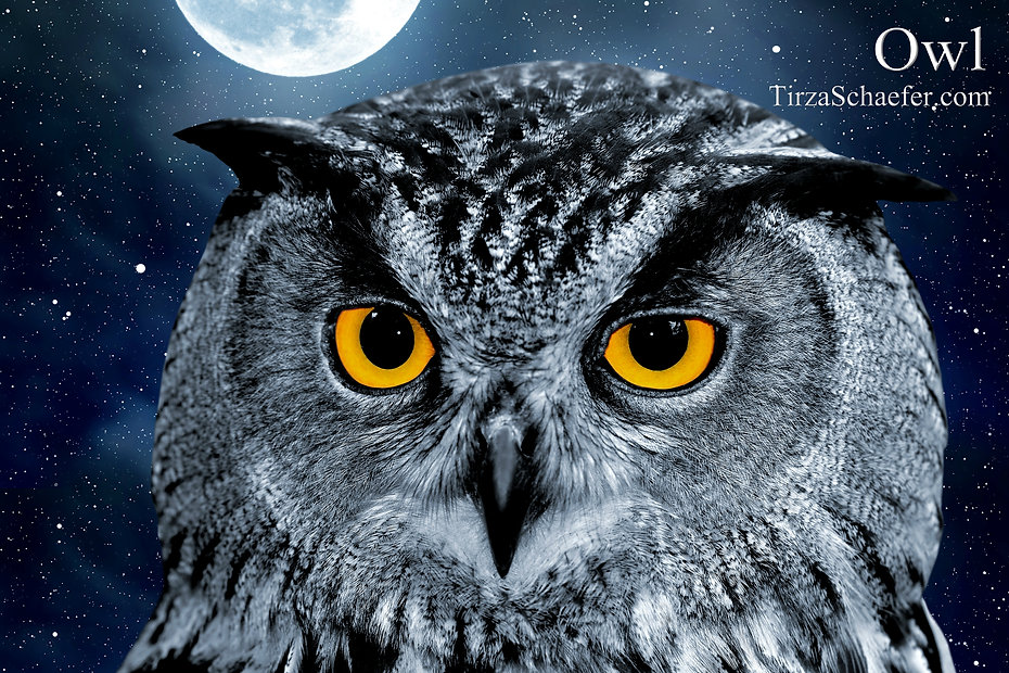 Owl 4x6.jpg