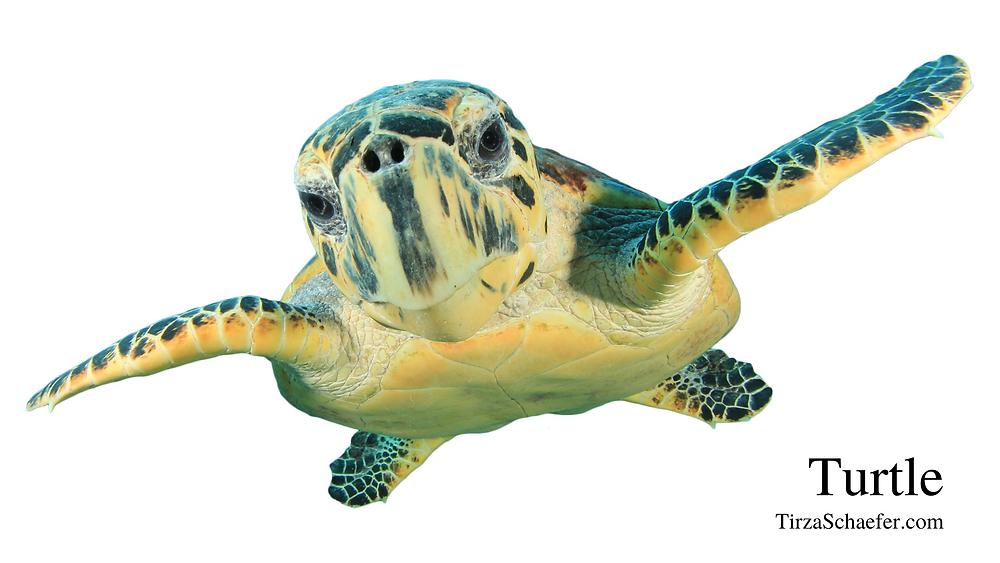 Power Animal Turtle