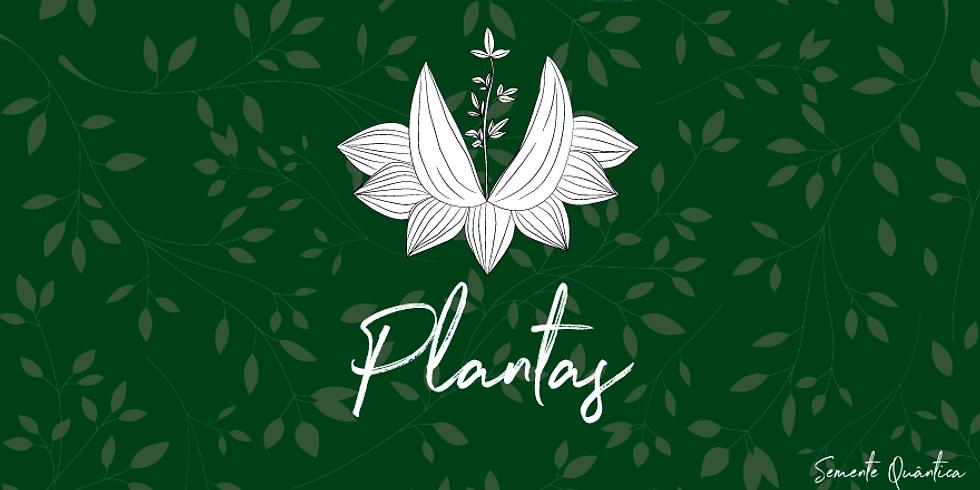 Plantas, Inhotim